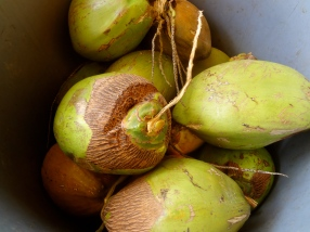 Southern-Most Coconuts