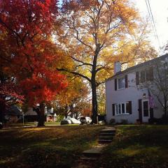 Dilston Rd - Autumn
