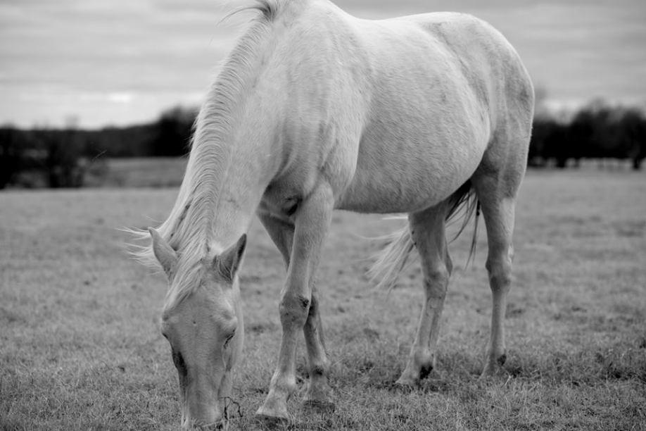 white horse 2