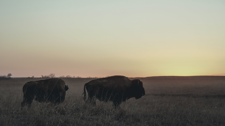 Tallgrass Praire Preserve - Osage County, OK