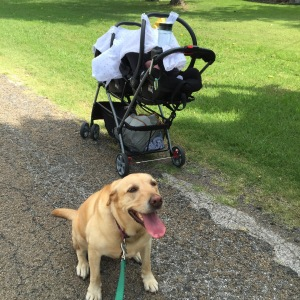 Dog + Twins + Walk = Win